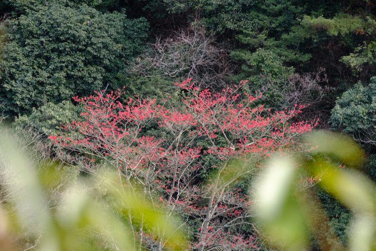 季節の花 イイギリ